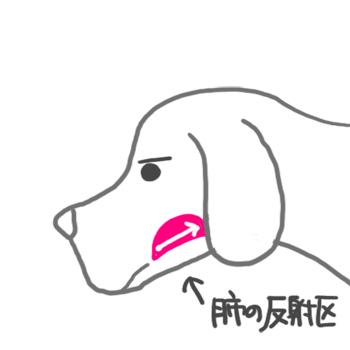 160823肺の反射区_edited-1.jpg