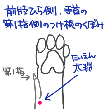 160823足の呼吸困難ツボ.jpg