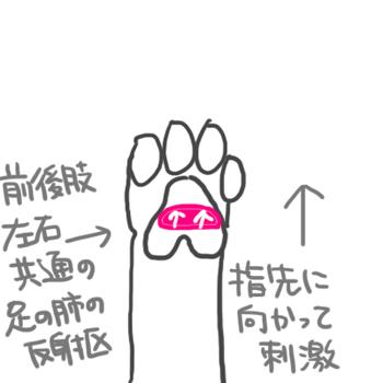 160823足の肺の反射区_edited-1.jpg
